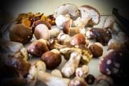 jak nejlepe konzervovat houby